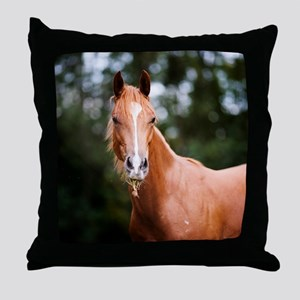 Young brown quarter horse eating gras Throw Pillow