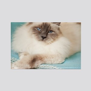 White sacred birman cat with blue Rectangle Magnet