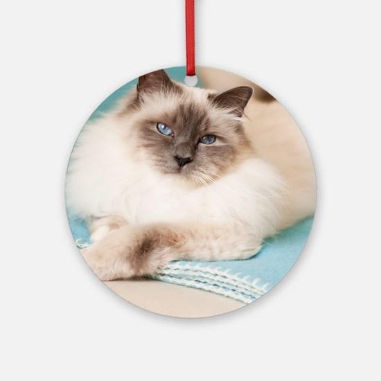 White sacred birman cat with blue e Round Ornament