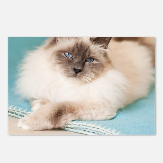 White sacred birman cat w Postcards (Package of 8)