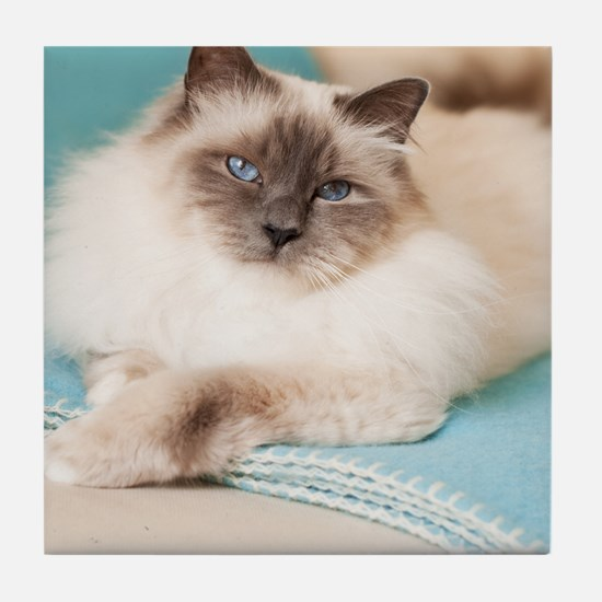 White sacred birman cat with blue eye Tile Coaster