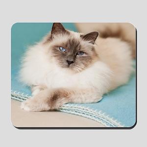 White sacred birman cat with blue eyes l Mousepad