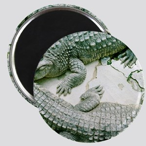 Two alligators. Magnet