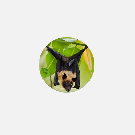 Fruit Bat Hanging In A Tree Mini Button