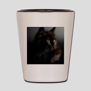 Little Black Cat Shot Glass