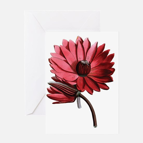 Red Water Lilies Greeting Card