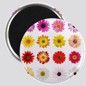 The Perfect Daisy Collection Magnet