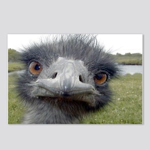Peek-A-Boo Ostrich Postcards (Package of 8)