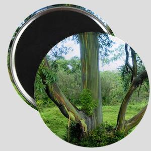 TreeTileSF Magnet