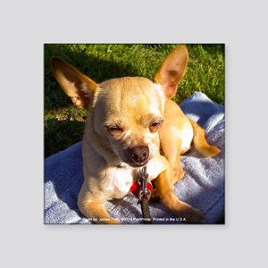 "Sunbathing Chihuahua Square Sticker 3"" x 3"""