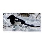 Black Billed Rocky Mountain Magpie Beach Towel