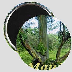 Rainbow Tree Maui Magnet