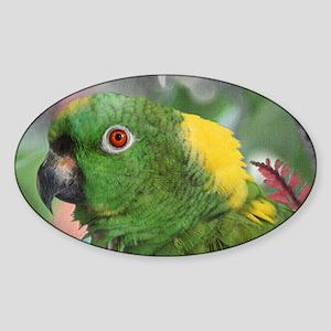 Yellow Nape Amazon Parrot Sticker (Oval)