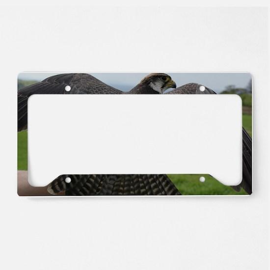 Peregrine Falcon License Plate Holder