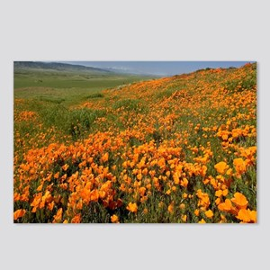 Field of Poppies Postcards (Package of 8)