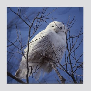 Snowy White Owl Tile Coaster