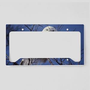 Snowy White Owl License Plate Holder