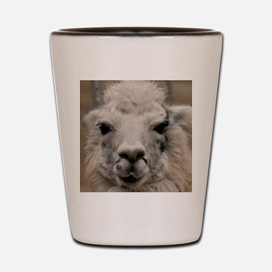 (15) Llama 8716 Shot Glass