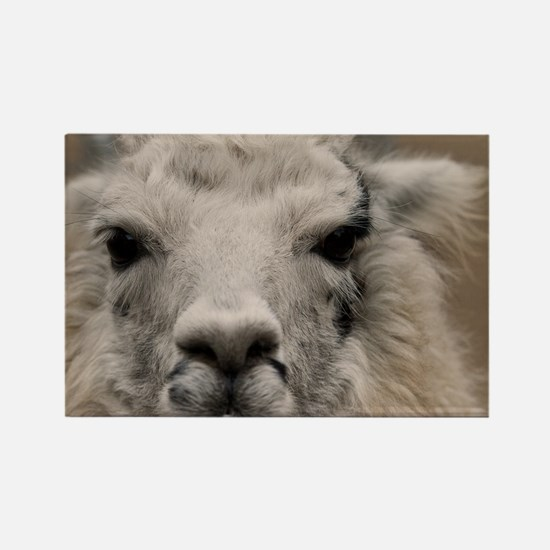 (14) Llama 8716 Rectangle Magnet