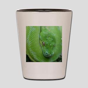 Tree python/chondro python Shot Glass