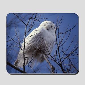 Snowy White Owl Mousepad
