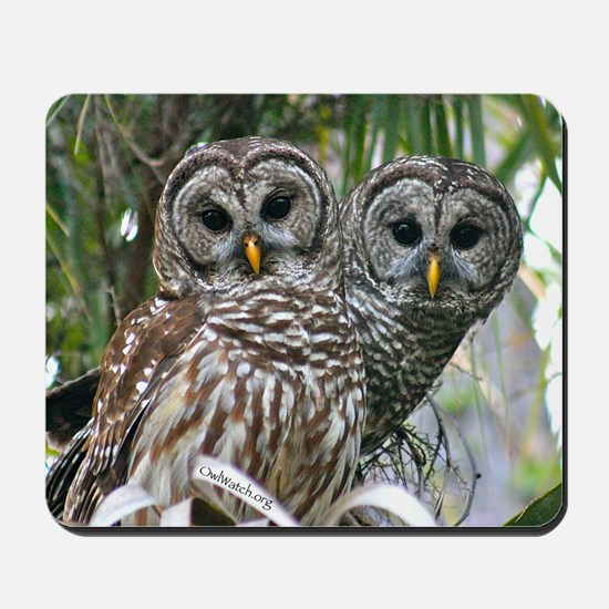 Barred Owl Pair Mousepad