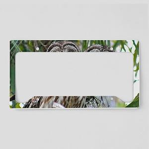 Barred Owl Pair License Plate Holder
