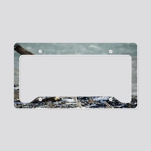 Magnificent Bald Eagle License Plate Holder