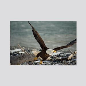 Magnificent Bald Eagle Rectangle Magnet