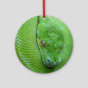 iPhone 5 case-Tree python Round Ornament