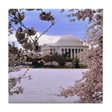 Cherry blossoms dc Tile Coasters