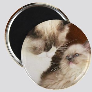 Ragdoll Mother and Child round2 Magnet