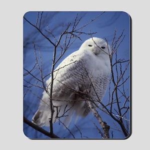 Snowy Owl - White Bird against a Sapphir Mousepad