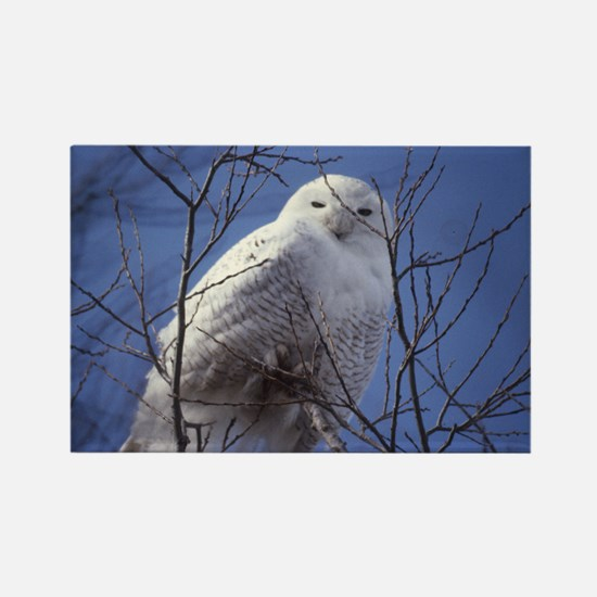 Snowy White Owl Rectangle Magnet