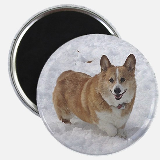 Red and White Corgi in the Snow Magnet