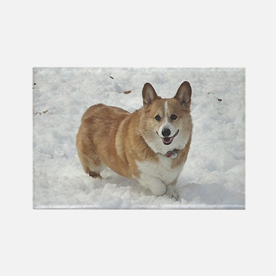 Red and White Corgi in the Snow Rectangle Magnet