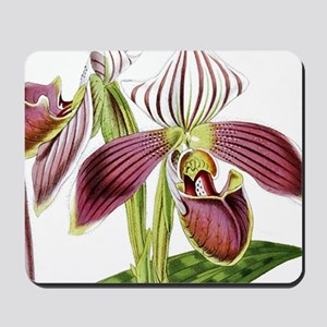 Lady Slipper Orchid Mousepad