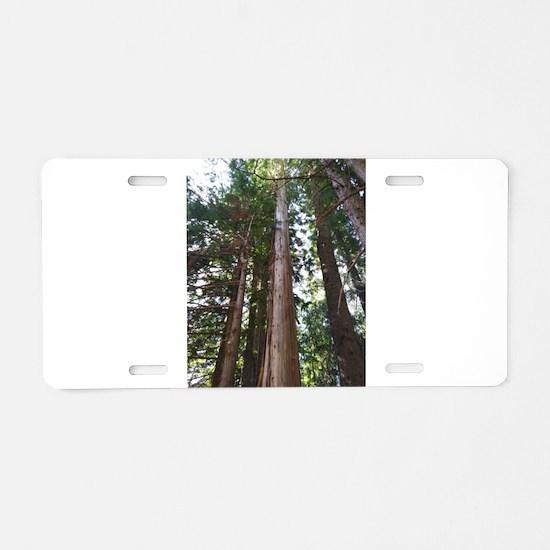 Cedar Trees Aluminum License Plate