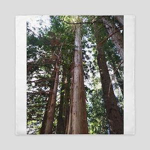 Cedar Trees Queen Duvet
