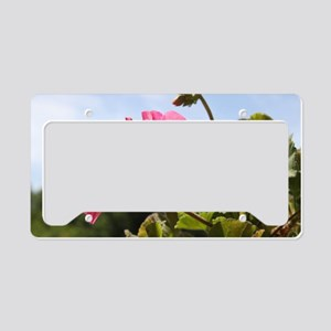 Pink Geranium in Virginia Sun License Plate Holder