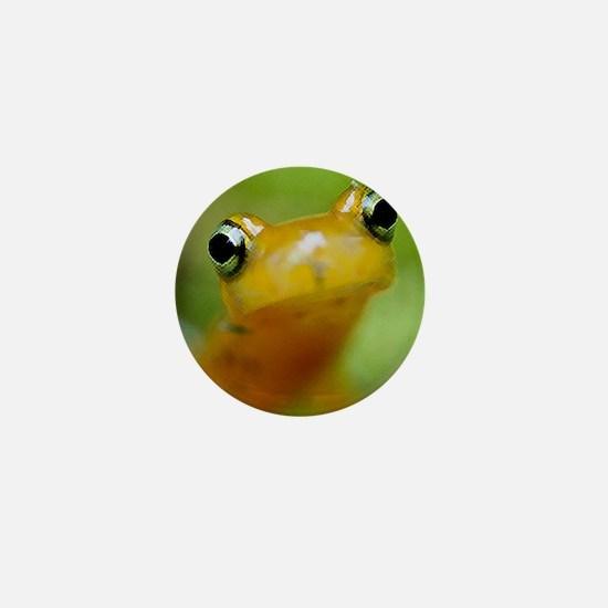 Salamander Mini Button