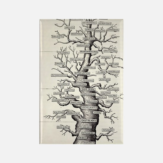 1886 French copy Haeckel 'tree of Rectangle Magnet