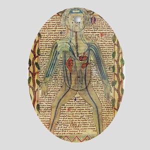 Circulatory system, 17th century Oval Ornament