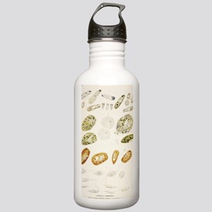 Protozoa, historical a Stainless Water Bottle 1.0L