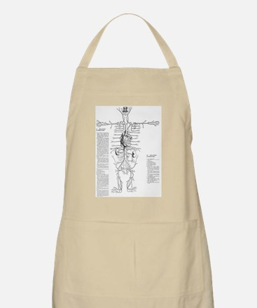 Circulatory system, 16th century Apron