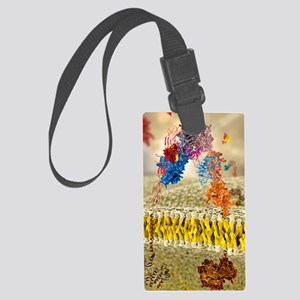 Insulin receptor, molecular mode Large Luggage Tag