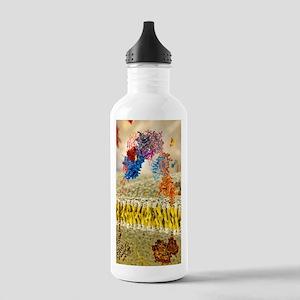 Insulin receptor, mole Stainless Water Bottle 1.0L
