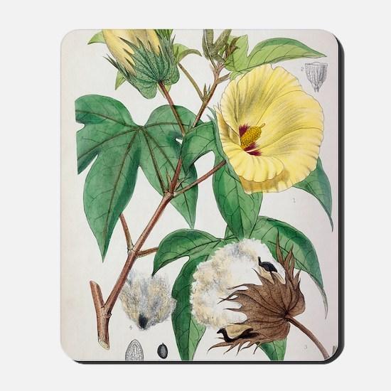 Pima cotton flowers, 19th century Mousepad