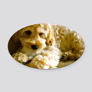 The Cockapoo Puppy Oval Car Magnet