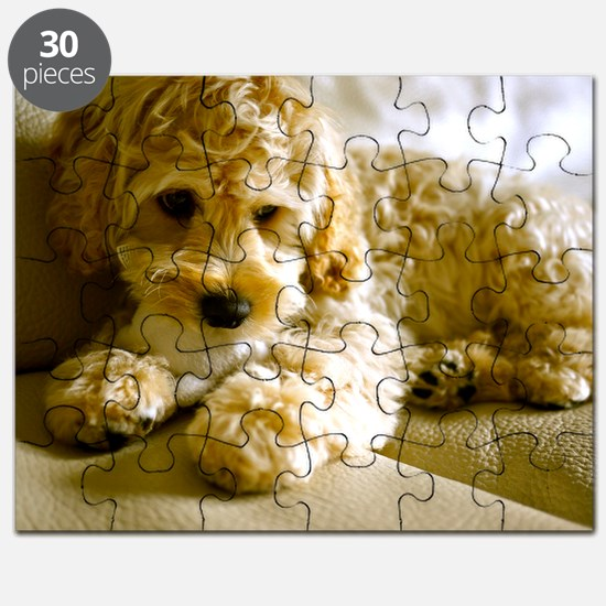 The Cockapoo Puppy Puzzle